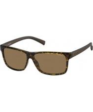 Polaroid Mens pld2027-S M31 ig Havana Brown occhiali da sole polarizzati