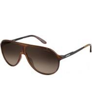 Carrera Nuovo campione 8f8 HA avana occhiali da sole neri